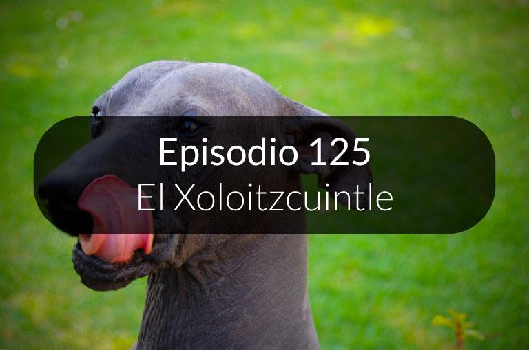 125.  El Xoloitzcuintle
