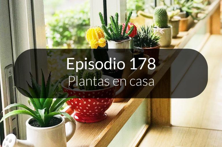 178. Plantas en casa