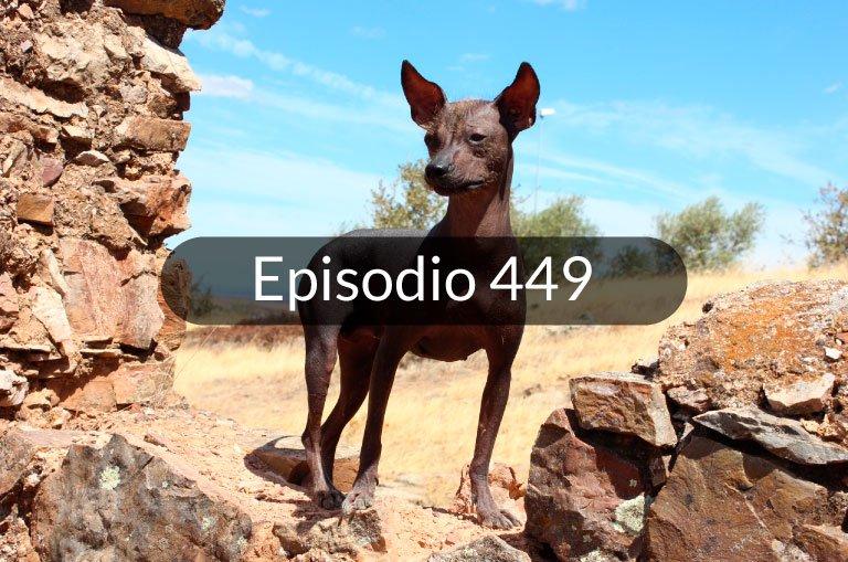 449. El perro sin pelo del Perú